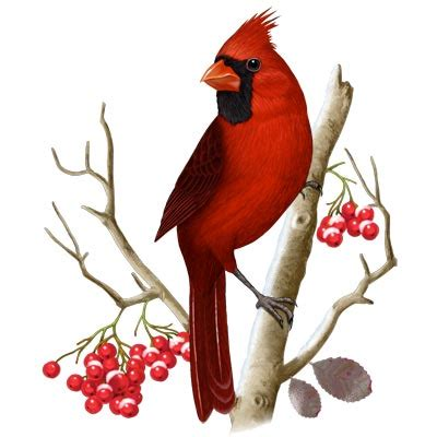 Essay in marathi language on my favourite bird parrot